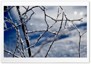 Frozen Twigs Bokeh HD Wide Wallpaper for Widescreen