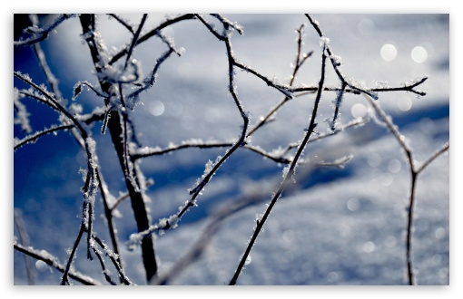 Frozen Twigs Bokeh HD wallpaper for Wide 16:10 5:3 Widescreen WHXGA WQXGA WUXGA WXGA WGA ; HD 16:9 High Definition WQHD QWXGA 1080p 900p 720p QHD nHD ; Standard 4:3 5:4 3:2 Fullscreen UXGA XGA SVGA QSXGA SXGA DVGA HVGA HQVGA devices ( Apple PowerBook G4 iPhone 4 3G 3GS iPod Touch ) ; Tablet 1:1 ; iPad 1/2/Mini ; Mobile 4:3 5:3 3:2 16:9 5:4 - UXGA XGA SVGA WGA DVGA HVGA HQVGA devices ( Apple PowerBook G4 iPhone 4 3G 3GS iPod Touch ) WQHD QWXGA 1080p 900p 720p QHD nHD QSXGA SXGA ; Dual 16:10 5:3 16:9 4:3 5:4 WHXGA WQXGA WUXGA WXGA WGA WQHD QWXGA 1080p 900p 720p QHD nHD UXGA XGA SVGA QSXGA SXGA ;