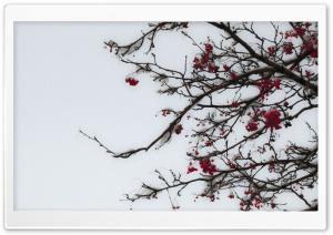 Fruity Winter Ultra HD Wallpaper for 4K UHD Widescreen desktop, tablet & smartphone
