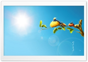 Funny Birds HD Wide Wallpaper for Widescreen