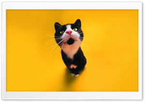 Funny Cat HD Wide Wallpaper for Widescreen