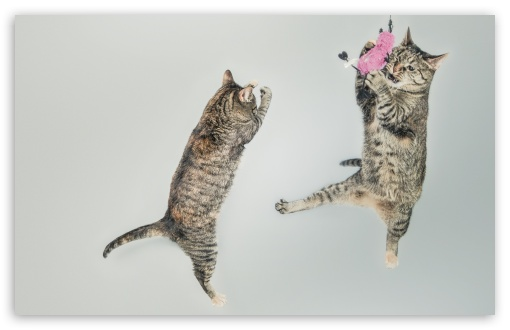 Funny Cats ❤ 4K UHD Wallpaper for Wide 16:10 5:3 Widescreen WHXGA WQXGA WUXGA WXGA WGA ; 4K UHD 16:9 Ultra High Definition 2160p 1440p 1080p 900p 720p ; UHD 16:9 2160p 1440p 1080p 900p 720p ; Standard 4:3 5:4 3:2 Fullscreen UXGA XGA SVGA QSXGA SXGA DVGA HVGA HQVGA ( Apple PowerBook G4 iPhone 4 3G 3GS iPod Touch ) ; Tablet 1:1 ; iPad 1/2/Mini ; Mobile 4:3 5:3 3:2 16:9 5:4 - UXGA XGA SVGA WGA DVGA HVGA HQVGA ( Apple PowerBook G4 iPhone 4 3G 3GS iPod Touch ) 2160p 1440p 1080p 900p 720p QSXGA SXGA ;