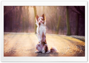 Funny Dog HD Wide Wallpaper for Widescreen