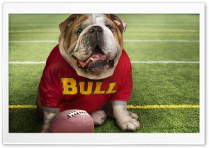 Funny Doggy Football Time HD Wide Wallpaper for Widescreen