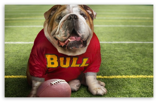Funny Doggy Football Time HD wallpaper for Wide 16:10 5:3 Widescreen WHXGA WQXGA WUXGA WXGA WGA ; Standard 4:3 5:4 3:2 Fullscreen UXGA XGA SVGA QSXGA SXGA DVGA HVGA HQVGA devices ( Apple PowerBook G4 iPhone 4 3G 3GS iPod Touch ) ; Tablet 1:1 ; iPad 1/2/Mini ; Mobile 4:3 5:3 3:2 5:4 - UXGA XGA SVGA WGA DVGA HVGA HQVGA devices ( Apple PowerBook G4 iPhone 4 3G 3GS iPod Touch ) QSXGA SXGA ;