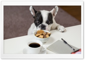 Funny French Bulldog Trying to Steal Biscuits HD Wide Wallpaper for 4K UHD Widescreen desktop & smartphone
