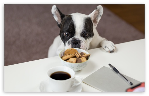 Funny French Bulldog Trying to Steal Biscuits UltraHD Wallpaper for Wide 16:10 5:3 Widescreen WHXGA WQXGA WUXGA WXGA WGA ; UltraWide 21:9 24:10 ; 8K UHD TV 16:9 Ultra High Definition 2160p 1440p 1080p 900p 720p ; UHD 16:9 2160p 1440p 1080p 900p 720p ; Standard 4:3 5:4 3:2 Fullscreen UXGA XGA SVGA QSXGA SXGA DVGA HVGA HQVGA ( Apple PowerBook G4 iPhone 4 3G 3GS iPod Touch ) ; Smartphone 16:9 3:2 5:3 2160p 1440p 1080p 900p 720p DVGA HVGA HQVGA ( Apple PowerBook G4 iPhone 4 3G 3GS iPod Touch ) WGA ; Tablet 1:1 ; iPad 1/2/Mini ; Mobile 4:3 5:3 3:2 16:9 5:4 - UXGA XGA SVGA WGA DVGA HVGA HQVGA ( Apple PowerBook G4 iPhone 4 3G 3GS iPod Touch ) 2160p 1440p 1080p 900p 720p QSXGA SXGA ;