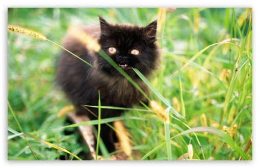 Funny Kitten Eating Grass HD wallpaper for Wide 16:10 5:3 Widescreen WHXGA WQXGA WUXGA WXGA WGA ; HD 16:9 High Definition WQHD QWXGA 1080p 900p 720p QHD nHD ; Standard 4:3 5:4 3:2 Fullscreen UXGA XGA SVGA QSXGA SXGA DVGA HVGA HQVGA devices ( Apple PowerBook G4 iPhone 4 3G 3GS iPod Touch ) ; Tablet 1:1 ; iPad 1/2/Mini ; Mobile 4:3 5:3 3:2 16:9 5:4 - UXGA XGA SVGA WGA DVGA HVGA HQVGA devices ( Apple PowerBook G4 iPhone 4 3G 3GS iPod Touch ) WQHD QWXGA 1080p 900p 720p QHD nHD QSXGA SXGA ;