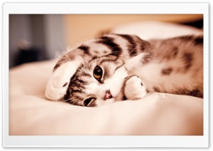 Funny Lazy Cat HD Wide Wallpaper for 4K UHD Widescreen desktop & smartphone