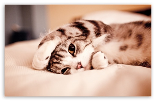 Funny Lazy Cat HD wallpaper for Standard 4:3 5:4 Fullscreen UXGA XGA SVGA QSXGA SXGA ; Wide 16:10 5:3 Widescreen WHXGA WQXGA WUXGA WXGA WGA ; HD 16:9 High Definition WQHD QWXGA 1080p 900p 720p QHD nHD ; Other 3:2 DVGA HVGA HQVGA devices ( Apple PowerBook G4 iPhone 4 3G 3GS iPod Touch ) ; Mobile VGA WVGA iPhone iPad PSP Phone - VGA QVGA Smartphone ( PocketPC GPS iPod Zune BlackBerry HTC Samsung LG Nokia Eten Asus ) WVGA WQVGA Smartphone ( HTC Samsung Sony Ericsson LG Vertu MIO ) HVGA Smartphone ( Apple iPhone iPod BlackBerry HTC Samsung Nokia ) Sony PSP Zune HD Zen ; Tablet 2 ;