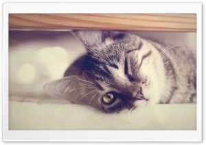 Funny Lazy Cat HD Wide Wallpaper for Widescreen
