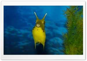 Funny Sea Creature HD Wide Wallpaper for Widescreen