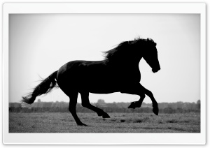 Gallop HD Wide Wallpaper for Widescreen