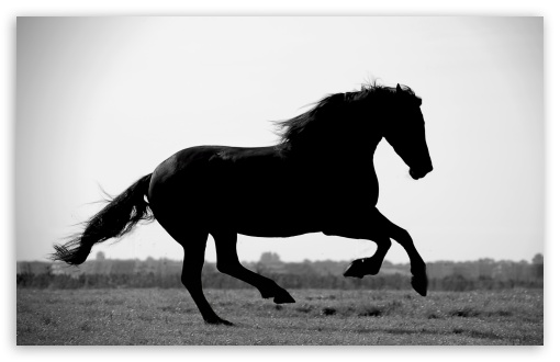 Gallop HD wallpaper for Wide 16:10 5:3 Widescreen WHXGA WQXGA WUXGA WXGA WGA ; HD 16:9 High Definition WQHD QWXGA 1080p 900p 720p QHD nHD ; Standard 4:3 5:4 3:2 Fullscreen UXGA XGA SVGA QSXGA SXGA DVGA HVGA HQVGA devices ( Apple PowerBook G4 iPhone 4 3G 3GS iPod Touch ) ; iPad 1/2/Mini ; Mobile 4:3 5:3 3:2 16:9 5:4 - UXGA XGA SVGA WGA DVGA HVGA HQVGA devices ( Apple PowerBook G4 iPhone 4 3G 3GS iPod Touch ) WQHD QWXGA 1080p 900p 720p QHD nHD QSXGA SXGA ;