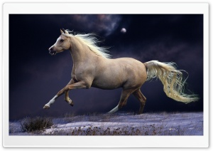 Galloping At Night HD Wide Wallpaper for Widescreen