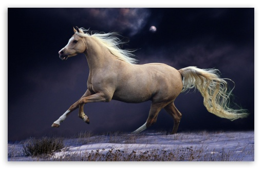 Galloping At Night ❤ 4K UHD Wallpaper for Wide 16:10 5:3 Widescreen WHXGA WQXGA WUXGA WXGA WGA ; 4K UHD 16:9 Ultra High Definition 2160p 1440p 1080p 900p 720p ; Standard 4:3 3:2 Fullscreen UXGA XGA SVGA DVGA HVGA HQVGA ( Apple PowerBook G4 iPhone 4 3G 3GS iPod Touch ) ; iPad 1/2/Mini ; Mobile 4:3 5:3 3:2 16:9 - UXGA XGA SVGA WGA DVGA HVGA HQVGA ( Apple PowerBook G4 iPhone 4 3G 3GS iPod Touch ) 2160p 1440p 1080p 900p 720p ;