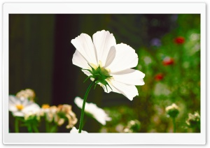 Garden Flower HD Wide Wallpaper for Widescreen