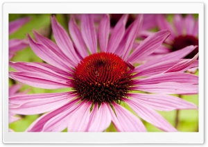 Garden Flower Macro HD Wide Wallpaper for Widescreen