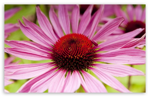 Garden Flower Macro HD wallpaper for Wide 16:10 5:3 Widescreen WHXGA WQXGA WUXGA WXGA WGA ; HD 16:9 High Definition WQHD QWXGA 1080p 900p 720p QHD nHD ; UHD 16:9 WQHD QWXGA 1080p 900p 720p QHD nHD ; Standard 3:2 Fullscreen DVGA HVGA HQVGA devices ( Apple PowerBook G4 iPhone 4 3G 3GS iPod Touch ) ; Mobile 5:3 3:2 16:9 - WGA DVGA HVGA HQVGA devices ( Apple PowerBook G4 iPhone 4 3G 3GS iPod Touch ) WQHD QWXGA 1080p 900p 720p QHD nHD ;