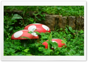 Garden Mushrooms HD Wide Wallpaper for Widescreen