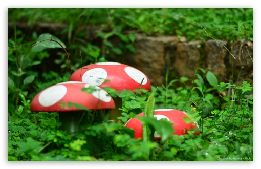 Garden Mushrooms ❤ 4K UHD Wallpaper for Wide 16:10 5:3 Widescreen WHXGA WQXGA WUXGA WXGA WGA ; 4K UHD 16:9 Ultra High Definition 2160p 1440p 1080p 900p 720p ; Standard 3:2 Fullscreen DVGA HVGA HQVGA ( Apple PowerBook G4 iPhone 4 3G 3GS iPod Touch ) ; Mobile 5:3 3:2 16:9 - WGA DVGA HVGA HQVGA ( Apple PowerBook G4 iPhone 4 3G 3GS iPod Touch ) 2160p 1440p 1080p 900p 720p ;