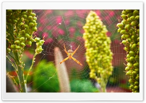 Garden Spider HD Wide Wallpaper for 4K UHD Widescreen desktop & smartphone
