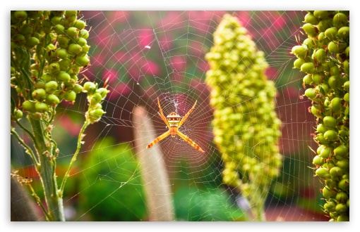 Garden Spider ❤ 4K UHD Wallpaper for Wide 16:10 5:3 Widescreen WHXGA WQXGA WUXGA WXGA WGA ; 4K UHD 16:9 Ultra High Definition 2160p 1440p 1080p 900p 720p ; UHD 16:9 2160p 1440p 1080p 900p 720p ; Standard 4:3 5:4 3:2 Fullscreen UXGA XGA SVGA QSXGA SXGA DVGA HVGA HQVGA ( Apple PowerBook G4 iPhone 4 3G 3GS iPod Touch ) ; Tablet 1:1 ; iPad 1/2/Mini ; Mobile 4:3 5:3 3:2 16:9 5:4 - UXGA XGA SVGA WGA DVGA HVGA HQVGA ( Apple PowerBook G4 iPhone 4 3G 3GS iPod Touch ) 2160p 1440p 1080p 900p 720p QSXGA SXGA ; Dual 16:10 5:3 16:9 4:3 5:4 WHXGA WQXGA WUXGA WXGA WGA 2160p 1440p 1080p 900p 720p UXGA XGA SVGA QSXGA SXGA ;