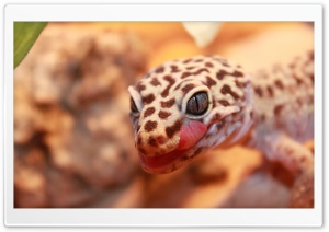 Gecko Leopard HD Wide Wallpaper for Widescreen