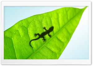 Gecko On A Leaf HD Wide Wallpaper for Widescreen