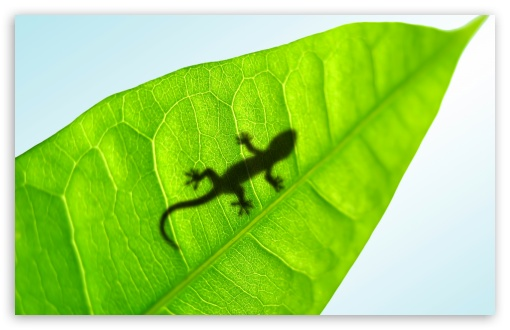 Gecko On A Leaf HD wallpaper for Wide 16:10 5:3 Widescreen WHXGA WQXGA WUXGA WXGA WGA ; HD 16:9 High Definition WQHD QWXGA 1080p 900p 720p QHD nHD ; Standard 4:3 5:4 3:2 Fullscreen UXGA XGA SVGA QSXGA SXGA DVGA HVGA HQVGA devices ( Apple PowerBook G4 iPhone 4 3G 3GS iPod Touch ) ; Tablet 1:1 ; iPad 1/2/Mini ; Mobile 4:3 5:3 3:2 16:9 5:4 - UXGA XGA SVGA WGA DVGA HVGA HQVGA devices ( Apple PowerBook G4 iPhone 4 3G 3GS iPod Touch ) WQHD QWXGA 1080p 900p 720p QHD nHD QSXGA SXGA ; Dual 16:10 5:3 16:9 4:3 5:4 WHXGA WQXGA WUXGA WXGA WGA WQHD QWXGA 1080p 900p 720p QHD nHD UXGA XGA SVGA QSXGA SXGA ;