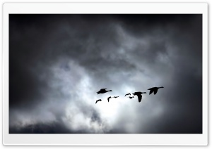 Geese Migrating Dark HD Wide Wallpaper for Widescreen