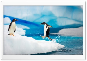 Gentoo Penguins HD Wide Wallpaper for 4K UHD Widescreen desktop & smartphone
