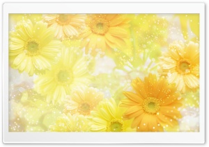 Gerbera Daisies Flowers 15 HD Wide Wallpaper for Widescreen