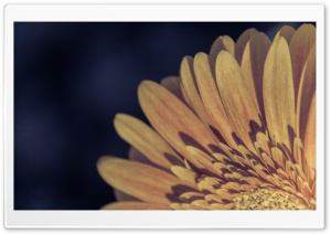Gerbera Vintage HD Wide Wallpaper for Widescreen