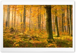 German Forest In Autumn HD Wide Wallpaper for Widescreen