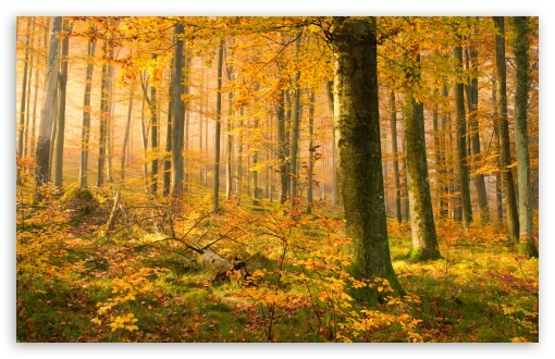 German Forest In Autumn HD wallpaper for Wide 16:10 5:3 Widescreen WHXGA WQXGA WUXGA WXGA WGA ; HD 16:9 High Definition WQHD QWXGA 1080p 900p 720p QHD nHD ; Standard 4:3 5:4 3:2 Fullscreen UXGA XGA SVGA QSXGA SXGA DVGA HVGA HQVGA devices ( Apple PowerBook G4 iPhone 4 3G 3GS iPod Touch ) ; Tablet 1:1 ; iPad 1/2/Mini ; Mobile 4:3 5:3 3:2 16:9 5:4 - UXGA XGA SVGA WGA DVGA HVGA HQVGA devices ( Apple PowerBook G4 iPhone 4 3G 3GS iPod Touch ) WQHD QWXGA 1080p 900p 720p QHD nHD QSXGA SXGA ;