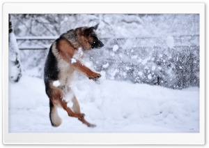 German Shepherd Plying In The Snow HD Wide Wallpaper for 4K UHD Widescreen desktop & smartphone