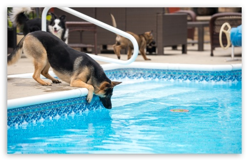 German Shepherd Pool Side HD wallpaper for Wide 16:10 5:3 Widescreen WHXGA WQXGA WUXGA WXGA WGA ; HD 16:9 High Definition WQHD QWXGA 1080p 900p 720p QHD nHD ; UHD 16:9 WQHD QWXGA 1080p 900p 720p QHD nHD ; Standard 4:3 5:4 Fullscreen UXGA XGA SVGA QSXGA SXGA ; MS 3:2 DVGA HVGA HQVGA devices ( Apple PowerBook G4 iPhone 4 3G 3GS iPod Touch ) ; Mobile VGA WVGA iPhone iPad PSP Phone - VGA QVGA Smartphone ( PocketPC GPS iPod Zune BlackBerry HTC Samsung LG Nokia Eten Asus ) WVGA WQVGA Smartphone ( HTC Samsung Sony Ericsson LG Vertu MIO ) HVGA Smartphone ( Apple iPhone iPod BlackBerry HTC Samsung Nokia ) Sony PSP Zune HD Zen ; Tablet 1&2 Android Retina ;