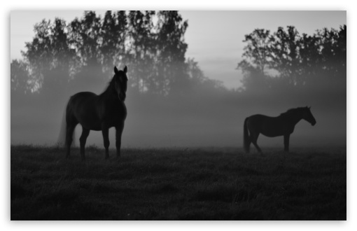 Ghost horses UltraHD Wallpaper for Wide 16:10 5:3 Widescreen WHXGA WQXGA WUXGA WXGA WGA ; UltraWide 21:9 24:10 ; 8K UHD TV 16:9 Ultra High Definition 2160p 1440p 1080p 900p 720p ; UHD 16:9 2160p 1440p 1080p 900p 720p ; Standard 4:3 3:2 Fullscreen UXGA XGA SVGA DVGA HVGA HQVGA ( Apple PowerBook G4 iPhone 4 3G 3GS iPod Touch ) ; Smartphone 16:9 3:2 5:3 2160p 1440p 1080p 900p 720p DVGA HVGA HQVGA ( Apple PowerBook G4 iPhone 4 3G 3GS iPod Touch ) WGA ; Tablet 1:1 ; iPad 1/2/Mini ; Mobile 4:3 5:3 3:2 16:9 5:4 - UXGA XGA SVGA WGA DVGA HVGA HQVGA ( Apple PowerBook G4 iPhone 4 3G 3GS iPod Touch ) 2160p 1440p 1080p 900p 720p QSXGA SXGA ; Dual 16:10 5:3 16:9 4:3 5:4 3:2 WHXGA WQXGA WUXGA WXGA WGA 2160p 1440p 1080p 900p 720p UXGA XGA SVGA QSXGA SXGA DVGA HVGA HQVGA ( Apple PowerBook G4 iPhone 4 3G 3GS iPod Touch ) ;