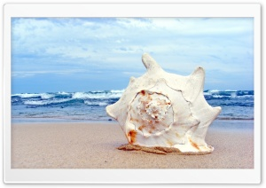 Giant Shell HD Wide Wallpaper for Widescreen