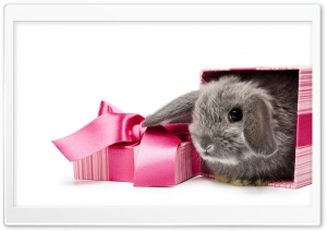 Gift HD Wide Wallpaper for Widescreen