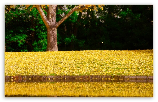 Ginkgo Reflection ❤ 4K UHD Wallpaper for Wide 16:10 5:3 Widescreen WHXGA WQXGA WUXGA WXGA WGA ; 4K UHD 16:9 Ultra High Definition 2160p 1440p 1080p 900p 720p ; UHD 16:9 2160p 1440p 1080p 900p 720p ; Standard 4:3 5:4 3:2 Fullscreen UXGA XGA SVGA QSXGA SXGA DVGA HVGA HQVGA ( Apple PowerBook G4 iPhone 4 3G 3GS iPod Touch ) ; Tablet 1:1 ; iPad 1/2/Mini ; Mobile 4:3 5:3 3:2 16:9 5:4 - UXGA XGA SVGA WGA DVGA HVGA HQVGA ( Apple PowerBook G4 iPhone 4 3G 3GS iPod Touch ) 2160p 1440p 1080p 900p 720p QSXGA SXGA ;