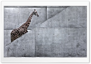Giraffe Climbing Stairs HD Wide Wallpaper for Widescreen