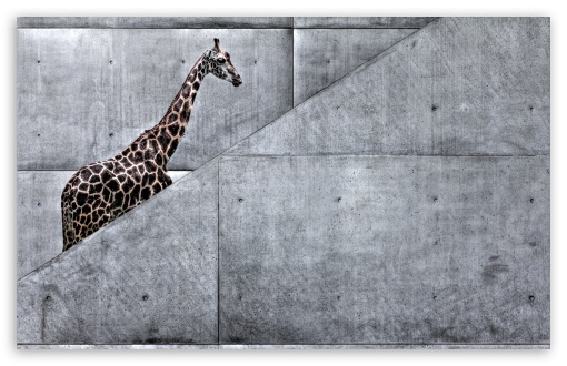 Giraffe Climbing Stairs HD wallpaper for Wide 16:10 5:3 Widescreen WHXGA WQXGA WUXGA WXGA WGA ; HD 16:9 High Definition WQHD QWXGA 1080p 900p 720p QHD nHD ; Standard 4:3 5:4 Fullscreen UXGA XGA SVGA QSXGA SXGA ; MS 3:2 DVGA HVGA HQVGA devices ( Apple PowerBook G4 iPhone 4 3G 3GS iPod Touch ) ; Mobile VGA WVGA iPhone iPad PSP Phone - VGA QVGA Smartphone ( PocketPC GPS iPod Zune BlackBerry HTC Samsung LG Nokia Eten Asus ) WVGA WQVGA Smartphone ( HTC Samsung Sony Ericsson LG Vertu MIO ) HVGA Smartphone ( Apple iPhone iPod BlackBerry HTC Samsung Nokia ) Sony PSP Zune HD Zen ; Tablet 1&2 Android ;
