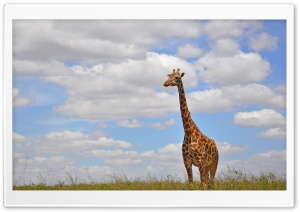Giraffe in Nairobi Park HD Wide Wallpaper for Widescreen