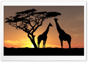 Giraffes In The Sunset HD Wide Wallpaper for 4K UHD Widescreen desktop & smartphone
