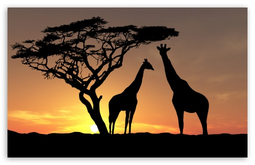 Giraffes In The Sunset HD wallpaper for Wide 16:10 5:3 Widescreen WHXGA WQXGA WUXGA WXGA WGA ; HD 16:9 High Definition WQHD QWXGA 1080p 900p 720p QHD nHD ; Standard 4:3 5:4 3:2 Fullscreen UXGA XGA SVGA QSXGA SXGA DVGA HVGA HQVGA devices ( Apple PowerBook G4 iPhone 4 3G 3GS iPod Touch ) ; Tablet 1:1 ; iPad 1/2/Mini ; Mobile 4:3 5:3 3:2 16:9 5:4 - UXGA XGA SVGA WGA DVGA HVGA HQVGA devices ( Apple PowerBook G4 iPhone 4 3G 3GS iPod Touch ) WQHD QWXGA 1080p 900p 720p QHD nHD QSXGA SXGA ;