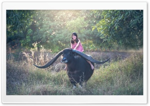 Girl riding a Longhorn Buffalo Ultra HD Wallpaper for 4K UHD Widescreen desktop, tablet & smartphone