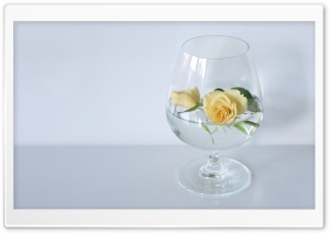 Glass Of Roses HD Wide Wallpaper for Widescreen