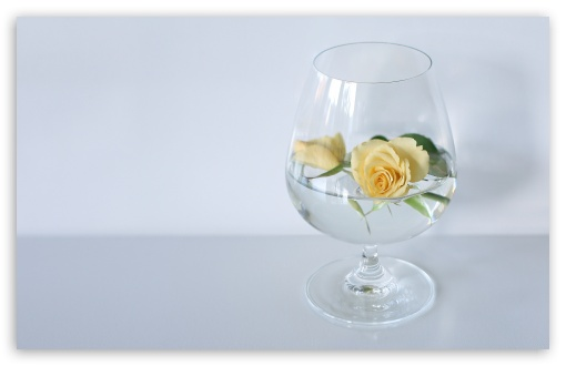 Glass Of Roses ❤ 4K UHD Wallpaper for Wide 16:10 5:3 Widescreen WHXGA WQXGA WUXGA WXGA WGA ; 4K UHD 16:9 Ultra High Definition 2160p 1440p 1080p 900p 720p ; UHD 16:9 2160p 1440p 1080p 900p 720p ; Standard 4:3 5:4 3:2 Fullscreen UXGA XGA SVGA QSXGA SXGA DVGA HVGA HQVGA ( Apple PowerBook G4 iPhone 4 3G 3GS iPod Touch ) ; Smartphone 5:3 WGA ; Tablet 1:1 ; iPad 1/2/Mini ; Mobile 4:3 5:3 3:2 16:9 5:4 - UXGA XGA SVGA WGA DVGA HVGA HQVGA ( Apple PowerBook G4 iPhone 4 3G 3GS iPod Touch ) 2160p 1440p 1080p 900p 720p QSXGA SXGA ;